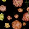 撮影期間3年の超大作 美しい花の成長を堪能できるタイムラプスムービー「Spring」