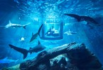 airbnb-ubi-bene-paris-aquarium-shark-suite-designboom-01
