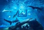 airbnb-ubi-bene-paris-aquarium-shark-suite-designboom-01