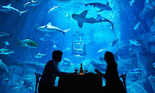 airbnb-ubi-bene-paris-aquarium-shark-suite-designboom-04