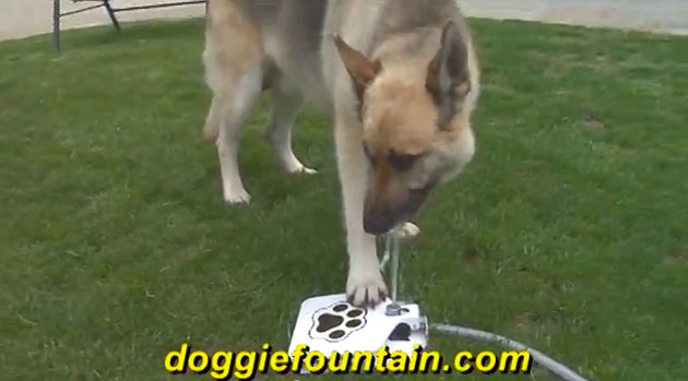 dogwater