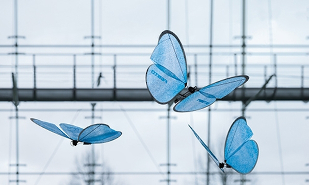 dronebutterfly1