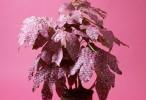floralpatterns1