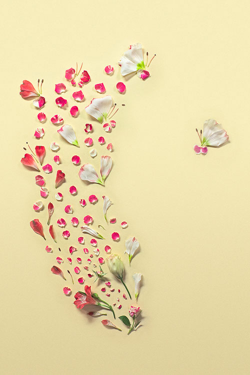 fongqiwei_flower1