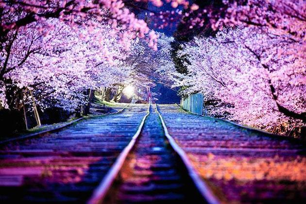 壮大感と風情を深く感じられる 日本の美しいさくらフォトシリーズ