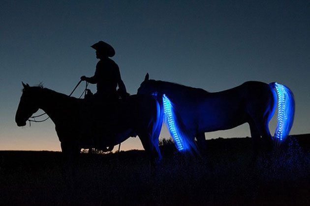 tail-lights-LED-strip-for-horses-by-sami-gros-620x413