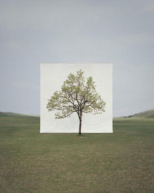 treephoto2