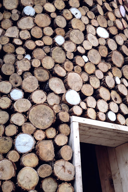 woodtree3